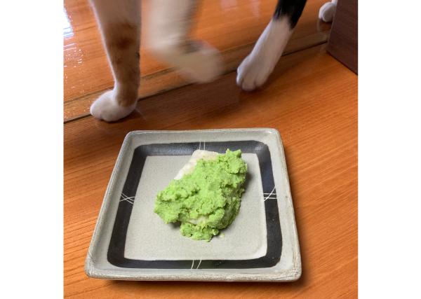 枝豆から作ったずんだ餅+猫